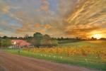 Goldie Wines sunset