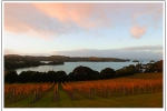 Goldie Wines autumn colours