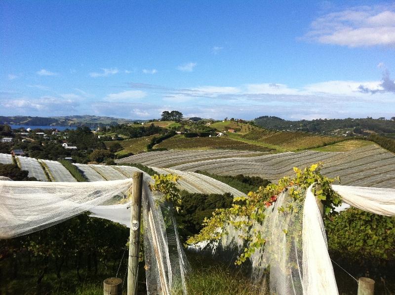 Nets over vines