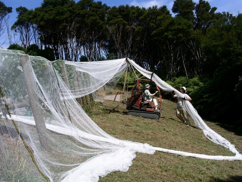 Netting in progress