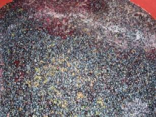 Grapes fermenting
